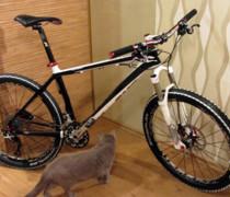Pragmatic White Dog bike photo
