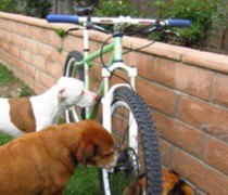 Big Tires Big Brakes bike photo