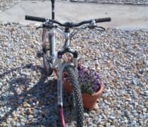 Inbred Trail Blazer bike photo