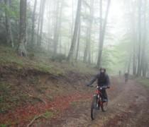 Razza bike photo