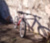 The Whippet bike photo 2